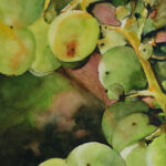 Grapes (print only)